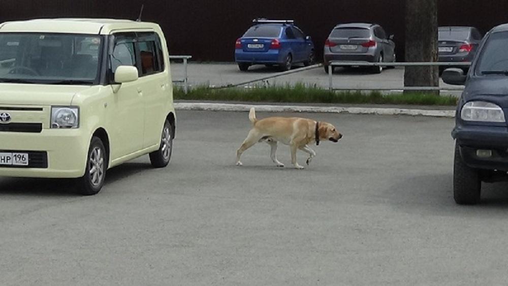Собаки искали, в какой из машин лежит запрещенное вещество