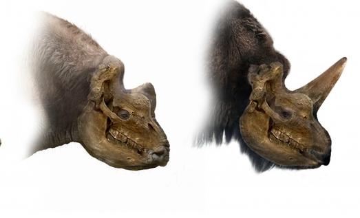 Уральские учёные доказали, что наши предки могли видеть «сибирских единорогов»