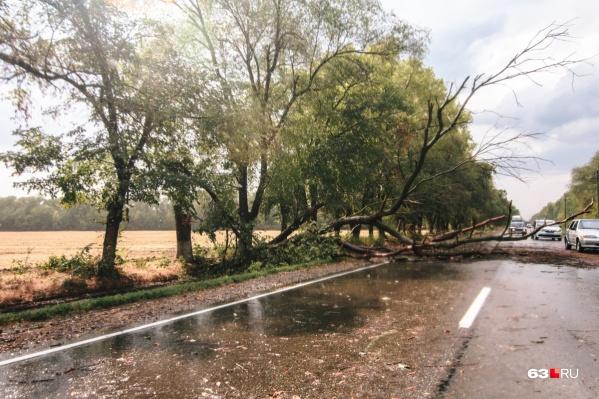 И-за ветра на дорогу могут упасть деревья