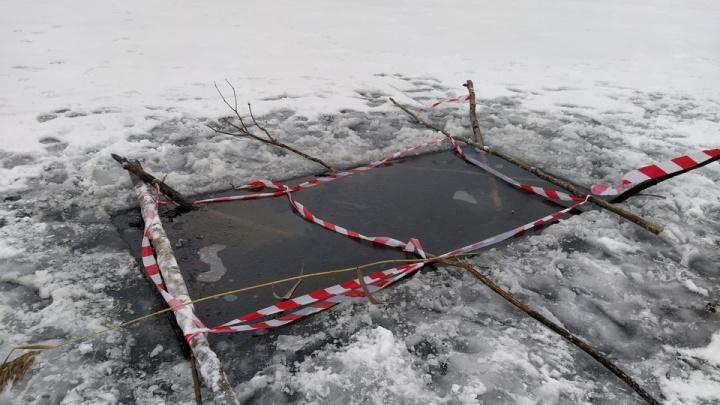 В Перевалово спасли замерзающего лебедёнка, который не улетал с карьера без травмированной мамы