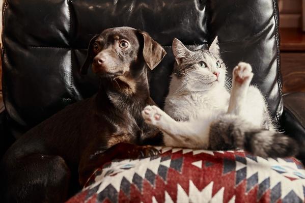 Бруно и Белка все время проводят вместе