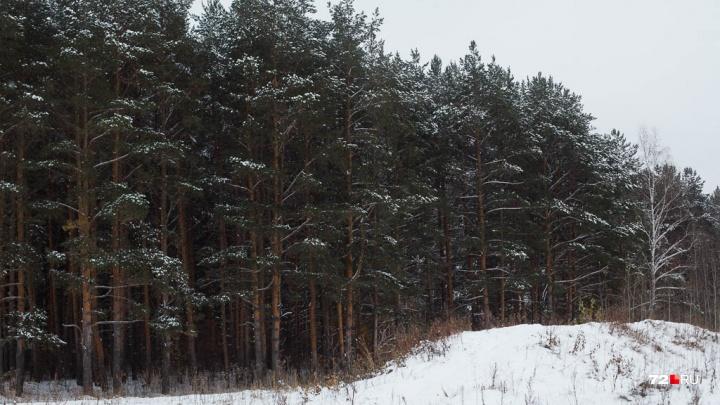 Расправа в лесу под Тюменью: не желая возвращать долг, подозреваемый решился на двойное убийство