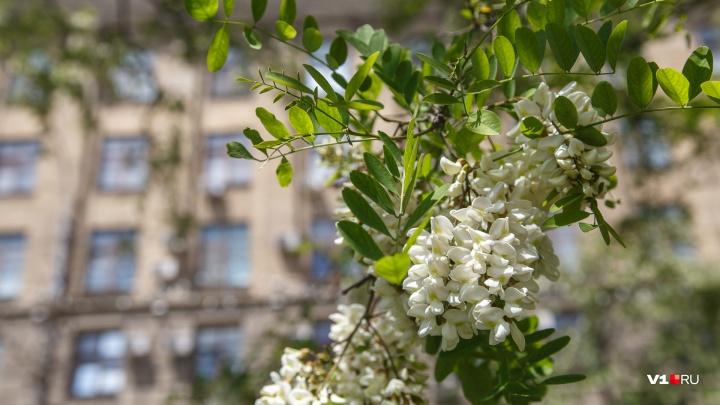 В последние дни лета Волгоград попрощается с 40-градусным пеклом