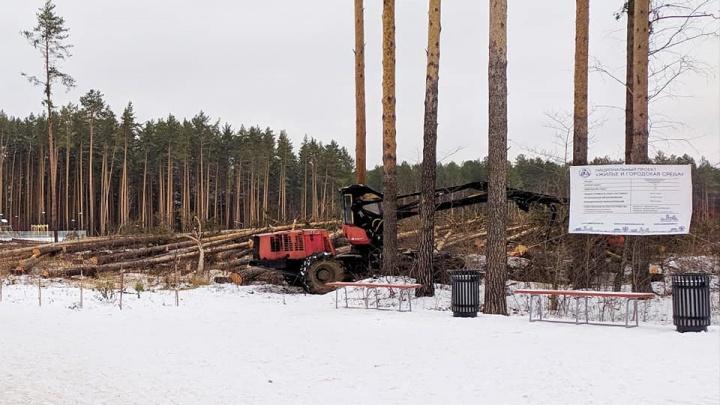 Превратили в лесоповал: в Березовском часть леса вырубилипод строительство школы