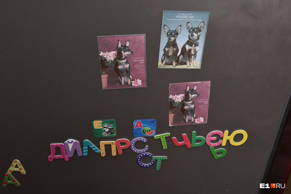 На холодильнике у Юлии магниты с изображением собак, с которых в 2000 году начался питомник
