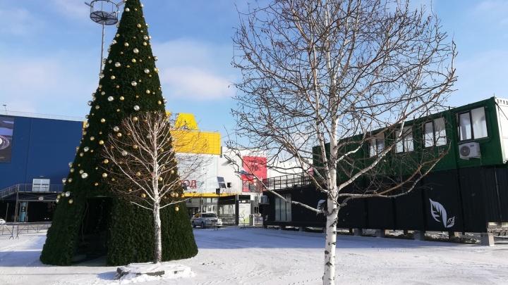 Праздник к нам приходит: возле «МЕГИ» поставили новогоднюю ёлку