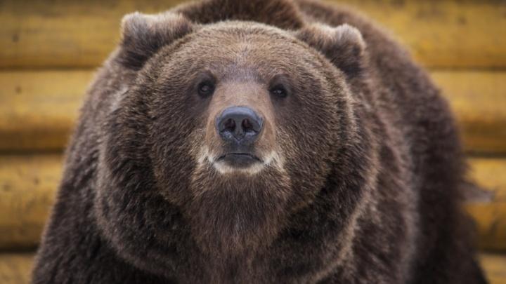 В Башкирии охотник приютил медведя