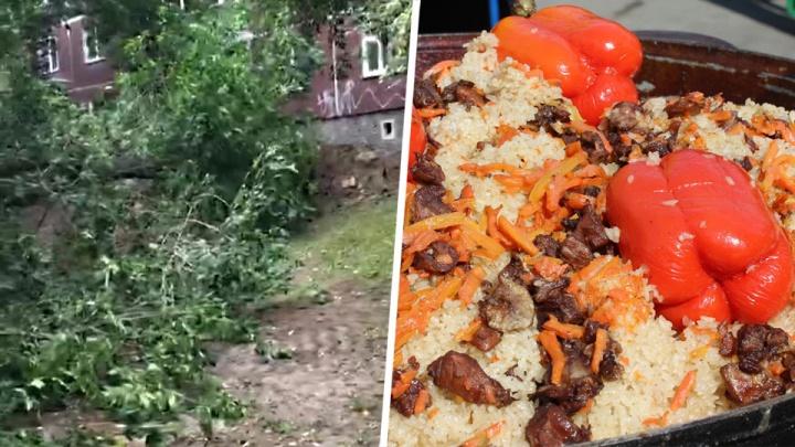 Рабочие уронили огромное дерево на тротуар в центре Новосибирска и начали готовить плов