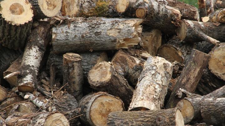 Спилил 48 сосен: в Башкирии у «черного» лесоруба отобрали трактор