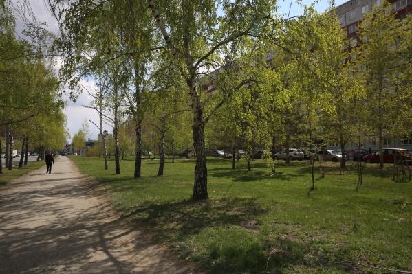Сейчас на этом участке находятся несколько десятков деревьев — преимущественно это берёзы и хвойные деревья