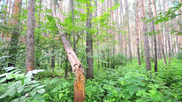 В лесу под Верхней Пышмой заблудился 15-летний подросток