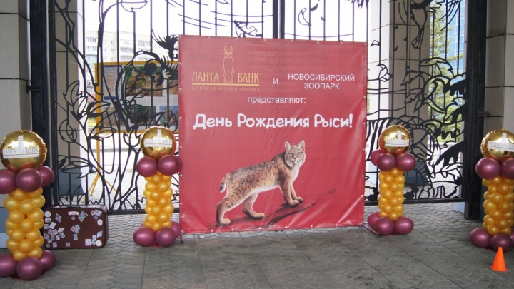 В новосибирском зоопаркеустроят праздник для рыси
