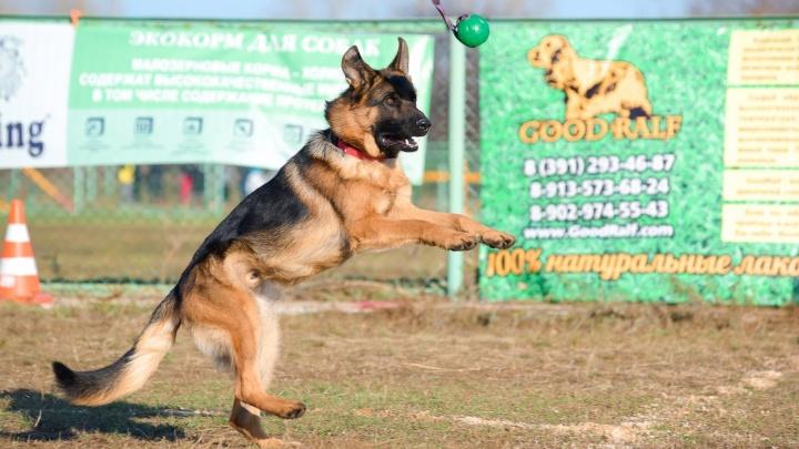 Летающие собаки: смотрим на снимки милых подвижных псов