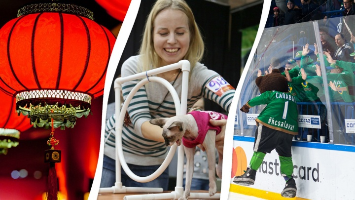 Выставка кошек, китайский Новый год и велоквест: 9 идей, как провести выходные в Уфе