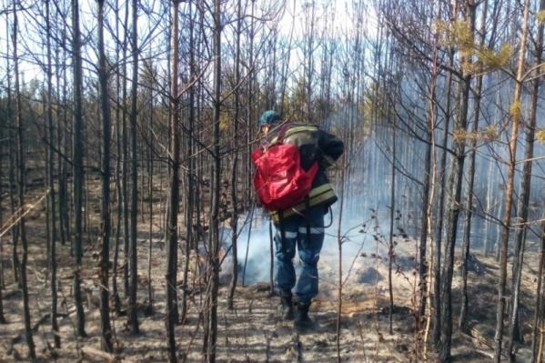 Сейчас пожарные осуществляют проливку лесной подстилки, чтобы предотвратить новое возгорание