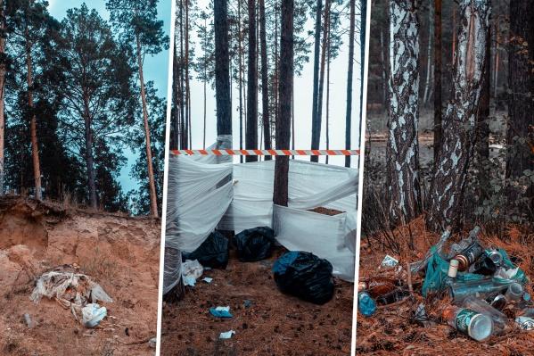 Филипп Васильев часто фотографирует сибирскую природу — на этот раз он поехал в Караканский бор, где застал удручающую картину