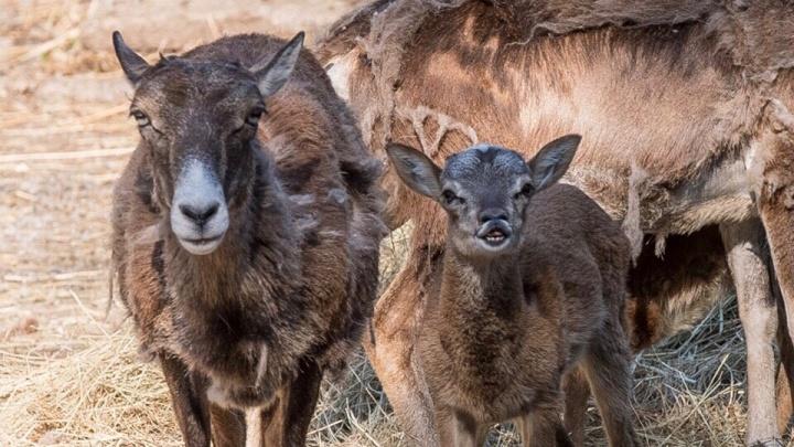 Большое прибавление: в ростовском зоопарке родились шесть новых животных