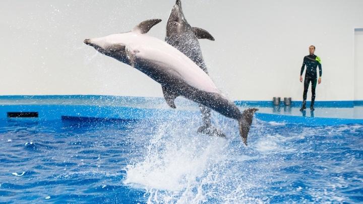 5 вечеров в Екатеринбурге: когда смотреть на дельфинов и где встретиться с космонавтом
