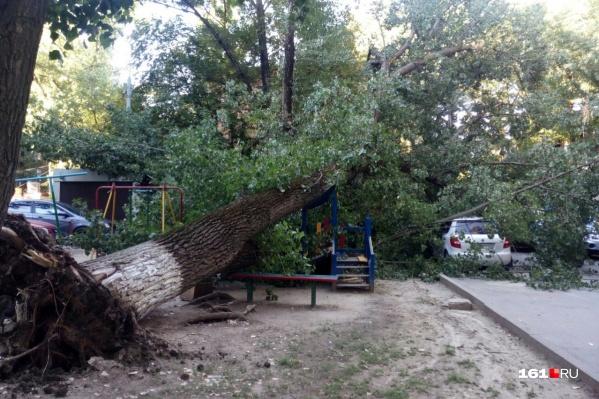 Деревья в последнее время в Ростове падают часто