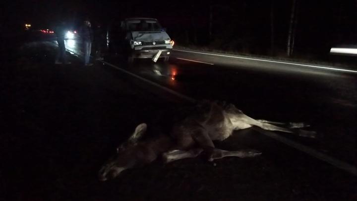 На трассе под Ярославлем сбили лосёнка