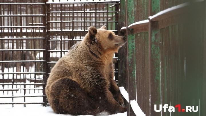 В уфимском парке Лесоводов не могут уснуть медведи