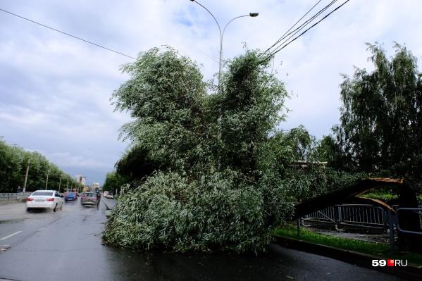 Из-за шквалистого ветра дерево упало на провода