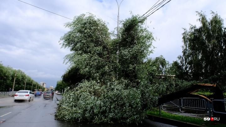 В Перми во время урагана пострадали три человека