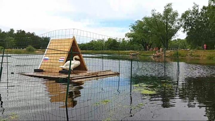 Лебедей из городского парка перевезут на страусиную ферму