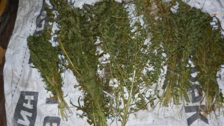 В Кургане полиция нашла у безработного 260 граммов каннабиса