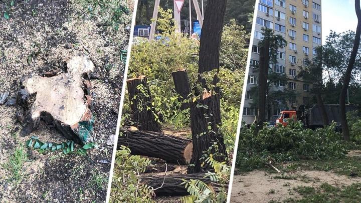 Велодорожки вместо деревьев: в ростовском парке вырубают зеленые насаждения