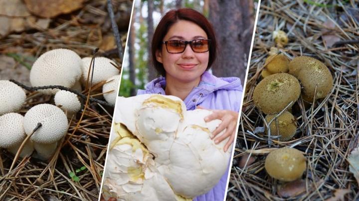 В красноярском заповеднике появились грибы без ножки и шляпки