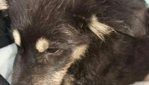 Трое мужчин на стоянке без причины избили кастетом живущего там щенка
