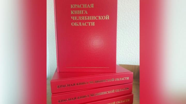 Включили даже пауков: Красную книгу Челябинской области пополнили 74 вида растений и животных
