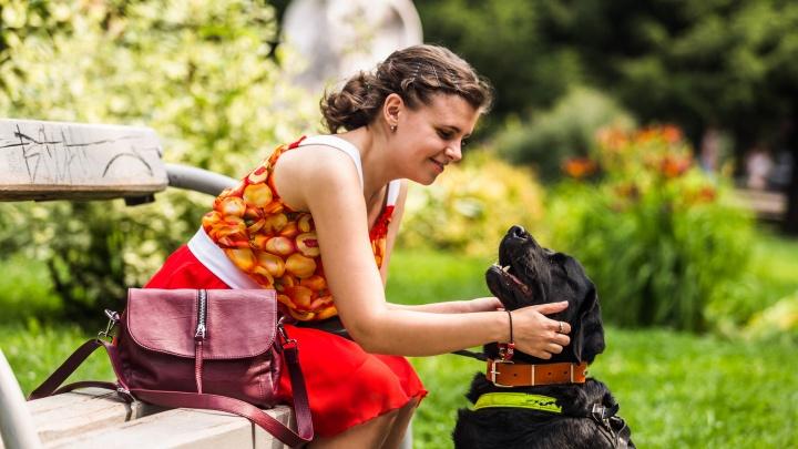 Пёс учёный: в НГТУ зачислили лабрадора — он будет ходить на лекции с незрячей хозяйкой