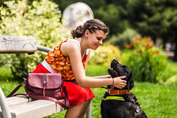 Лабрадор-ретривер по кличке Азалия приехала в Новосибирск из подмосковного центра подготовки собак-поводырей