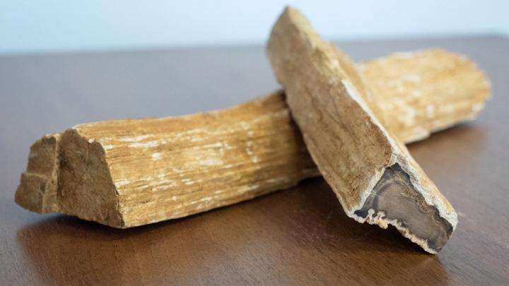 «Лежало сотни лет»: волгоградец нашел 50 килограммов окаменевшего дерева