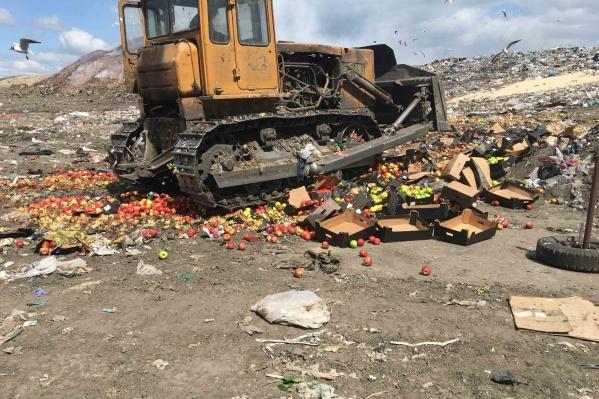Яблоки уничтожили 13 июня