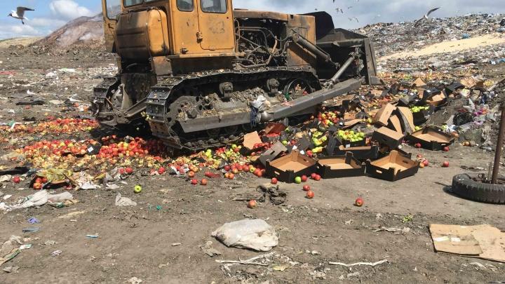 Более трех тонн санкционных яблок уничтожили в Кургане