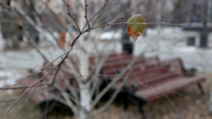 Бесснежно и холодно: синоптики дали прогноз погоды на 13 ноября
