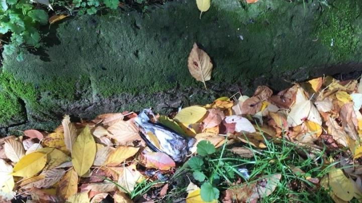 «Ребёнок ходит по этой тропинке в школу»: во дворе дома открыли стрельбу из пневмата