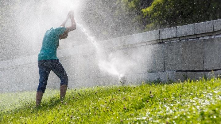 Зной и мошки: Волгоград к четвергу раскалится до +34 ºС в тени