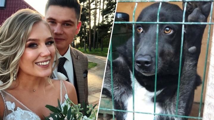 «И на душе потеплело»: в Рыбинске молодожёнам на свадьбу вместо подарков гости принесли собачий корм