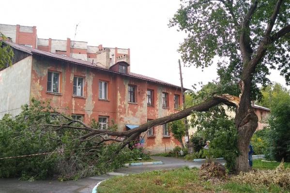 Дерево упало около 13 часов дня