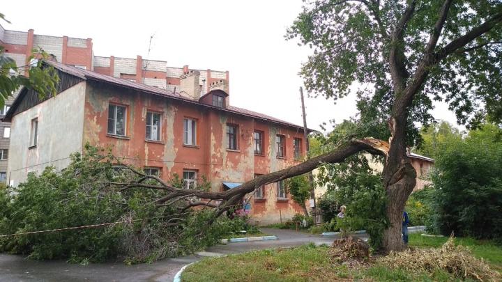 Дерево оборвало провода во дворе за Красным проспектом: жители остались без света