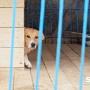 «Никто не может на него найти управу»: жителя Кунгура подозревают в убийстве породистых собак