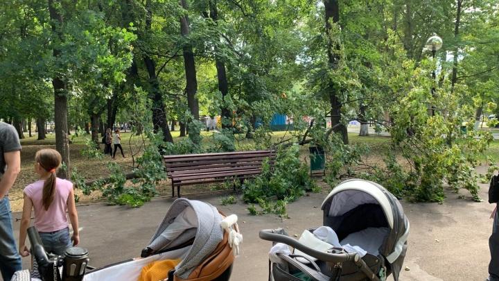 «Коляска перевернулась вместе с ребенком»: на скамейку в парке Гагарина упала огромная ветка