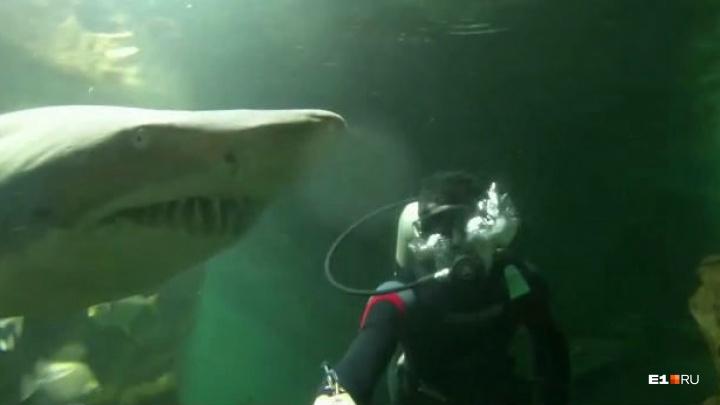 В Екатеринбург привезли акул, которые могут делать то, чего не умеют их сородичи. Видео
