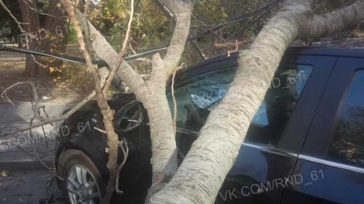 В центре Ростова старое дерево рухнуло на две иномарки