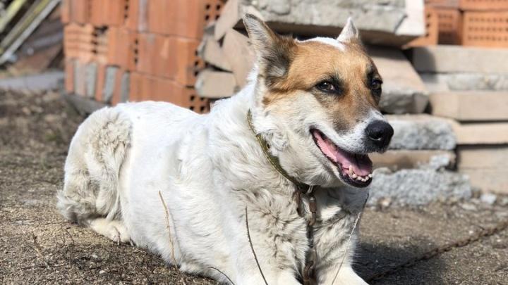 Сидел на месте целую неделю: новосибирцы нашли у Димитровского моста верного пса без хозяина