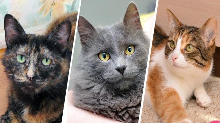 «Филипп Киркоров ищет дом»: 5 объявлений, в которых авторы очень постарались, чтобы пристроить кота